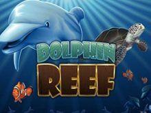 Dolphin Reef Online Kostenlos Spielen